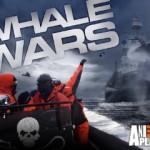 WhaleWars8391