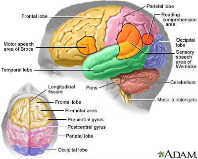Brain SC