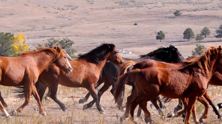 Photo Credit: Facebook/Black Hills Wild Horse Sanctuary