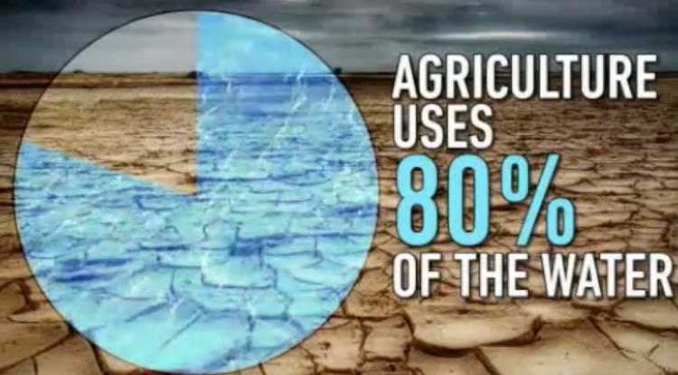 Water percentage