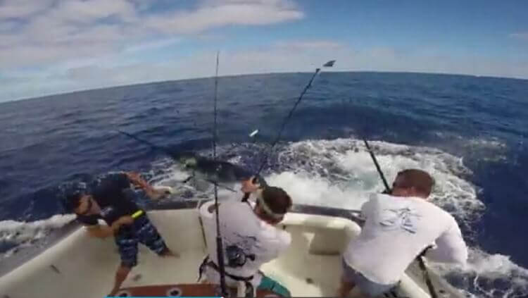 Connor Cogan almost impaled by 200 marlin. Image Credit: Screenshot DailyMail Video