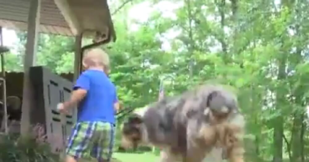 Dog Lunges in Front of Toddler. Dad Looks Down, Sees Copperhead Snake Bite on Dog's Neck