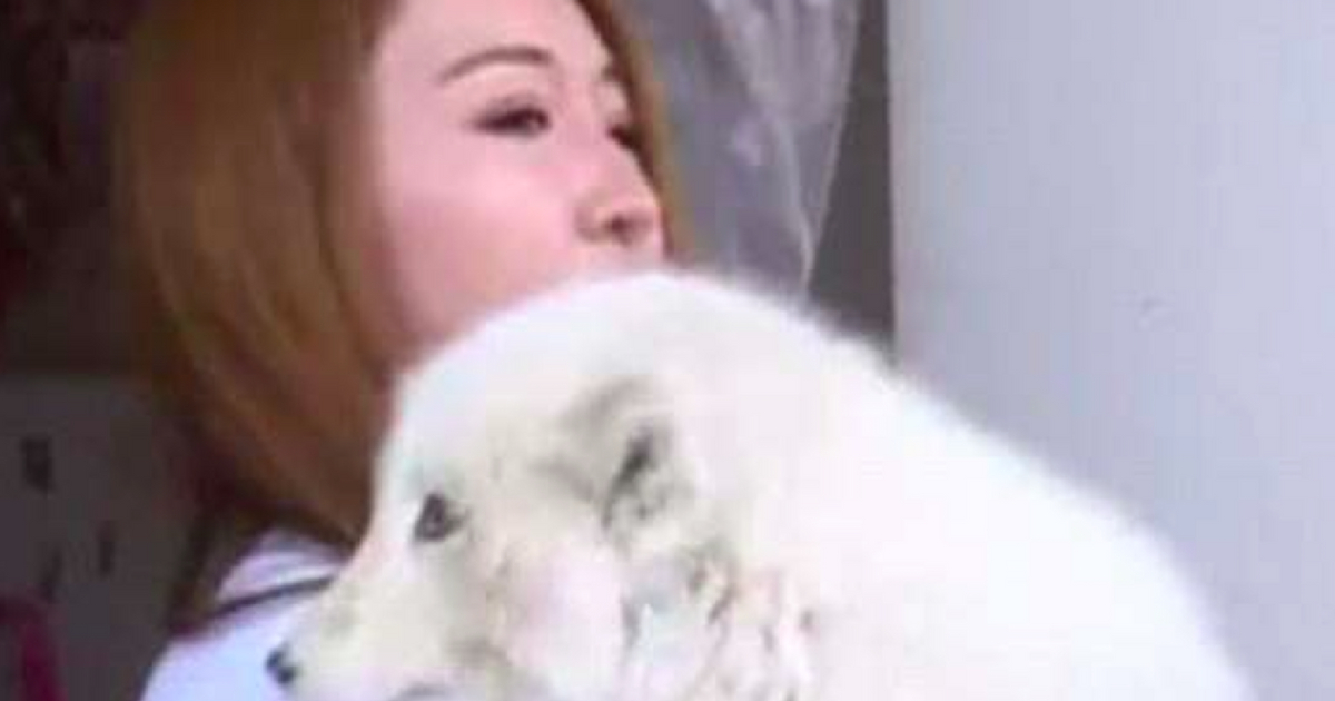 Woman Finds Out Dog Who Never Barks Purchased from Pet Store Is Actually a Fox