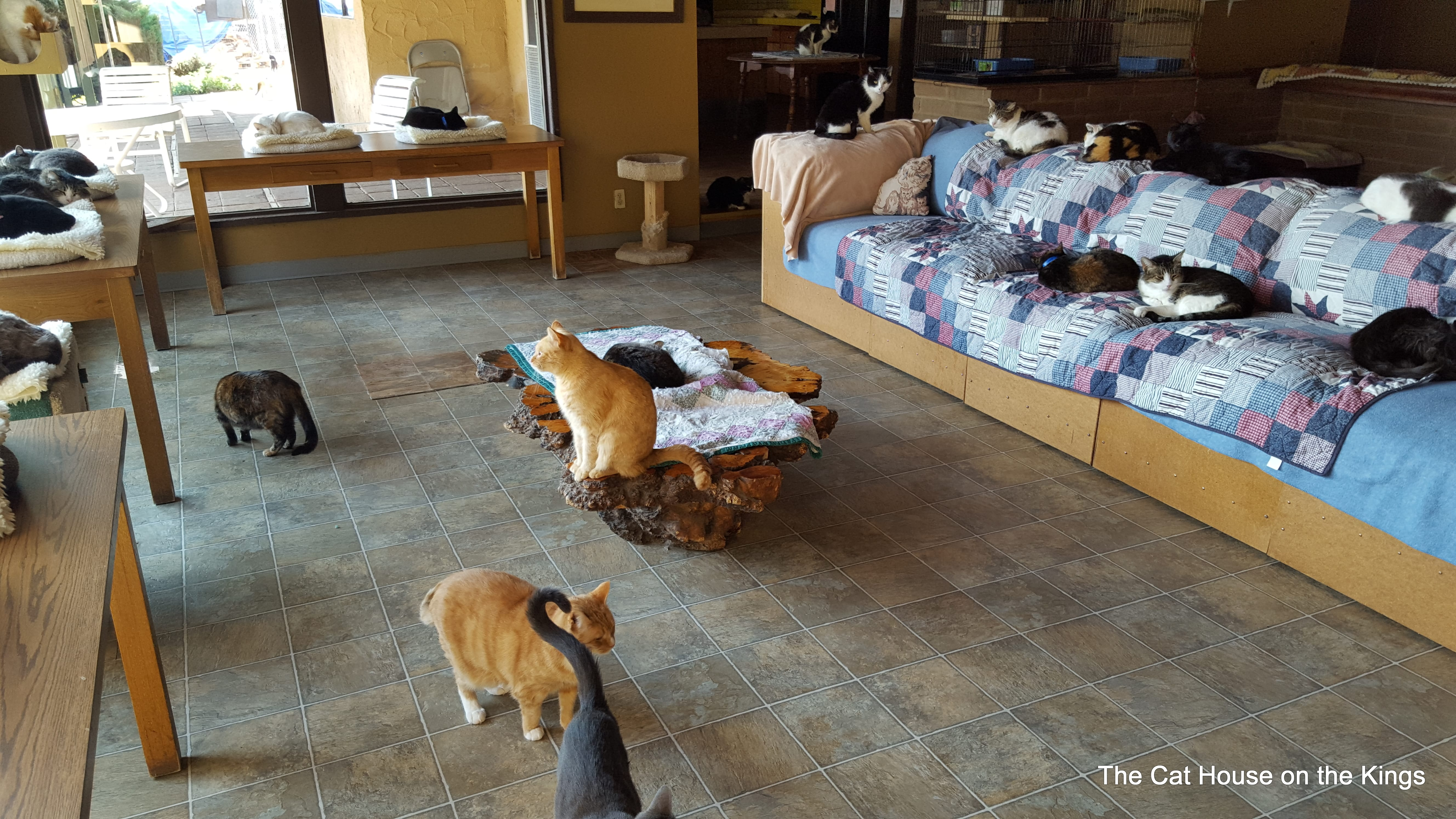 Main Room Cat House