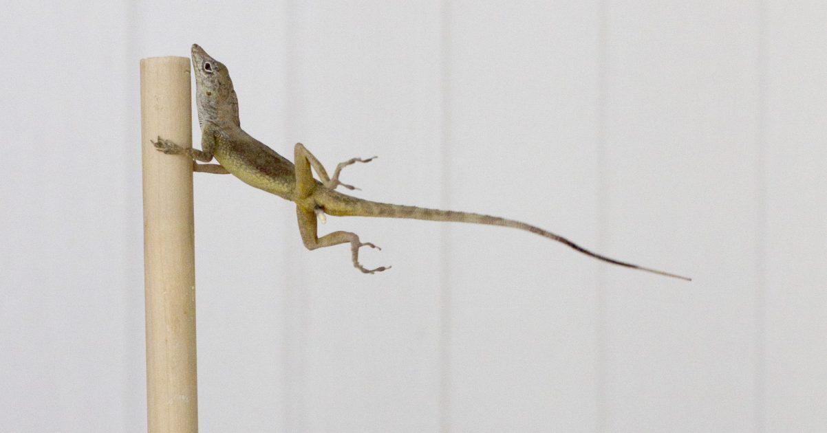 A lizard holding onto a pole.