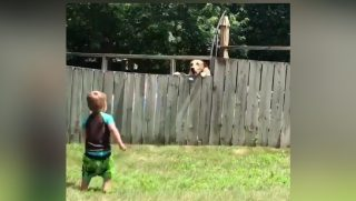 Boy and Dog Play Fetch over fence