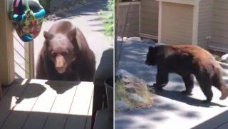 Scare Bear Away