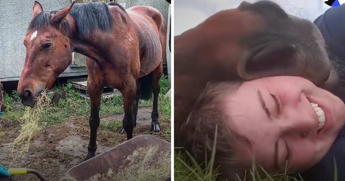 A woman helped rescue a horse, and they became best friends.