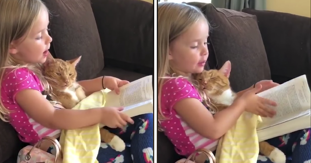 A little orange cat falls asleep in her owner's arms.