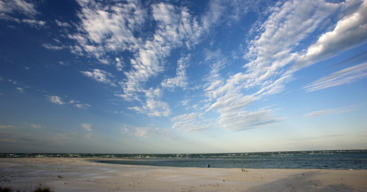 Florida's marine life and coasts are being affected by a toxic algae.