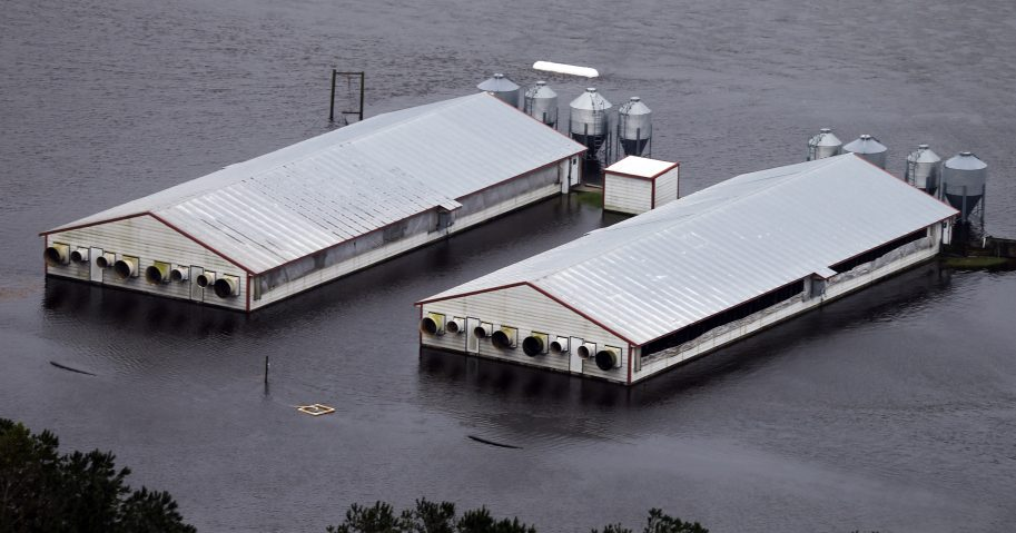 A hog farm is inundated with floodwaters from Hurricane Florence near Trenton, North Carolina, on Sunday.