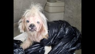 Little dog with missing fur in trash bag.