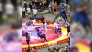 A camel ride at intermission of the Shrine Circus at the PPG Paints Arena in Pittsburgh turned dangerous when the camel was spooked and went on a rampage, injuring seven people.