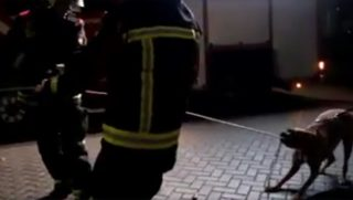 Dog Helps Firefighters with Rope