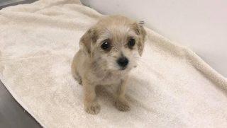 Little puppy in a vet's office.
