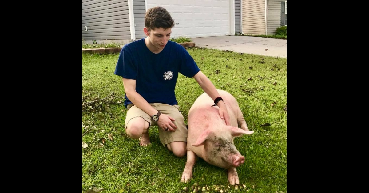 Boy with the pig he saved.