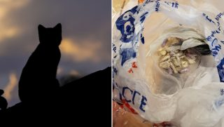 A cat sitting in the dark, left, and a bag of drugs, right.