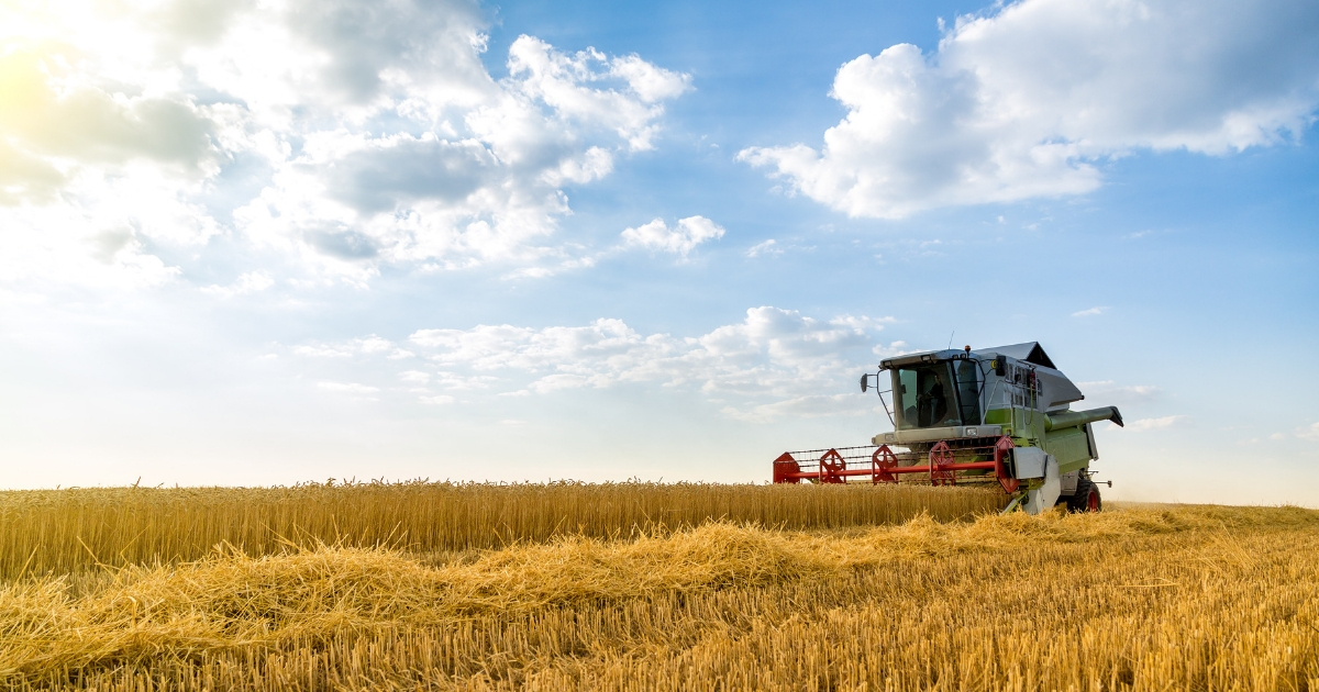 Combine harvester in action on a wheat field