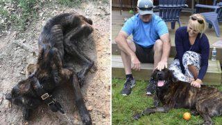 Starved Dog Finds Forever Home