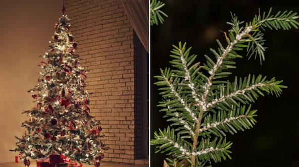 Christmas tree, left, and bugs on a branch, right.