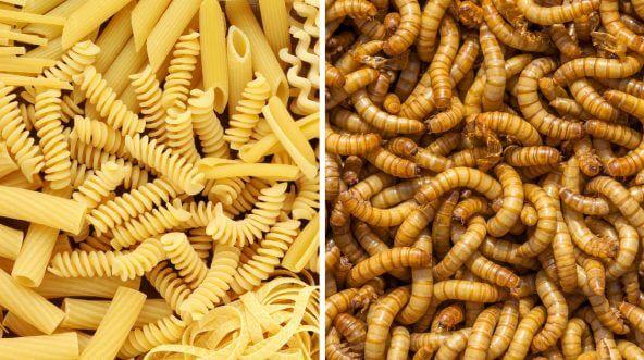 Pasta vs mealworms