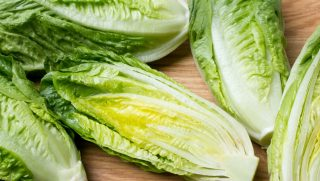Heads of romaine lettuce