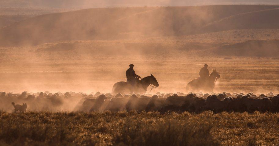 Ranchers herd sheep.