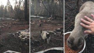 Cat Found After FIre