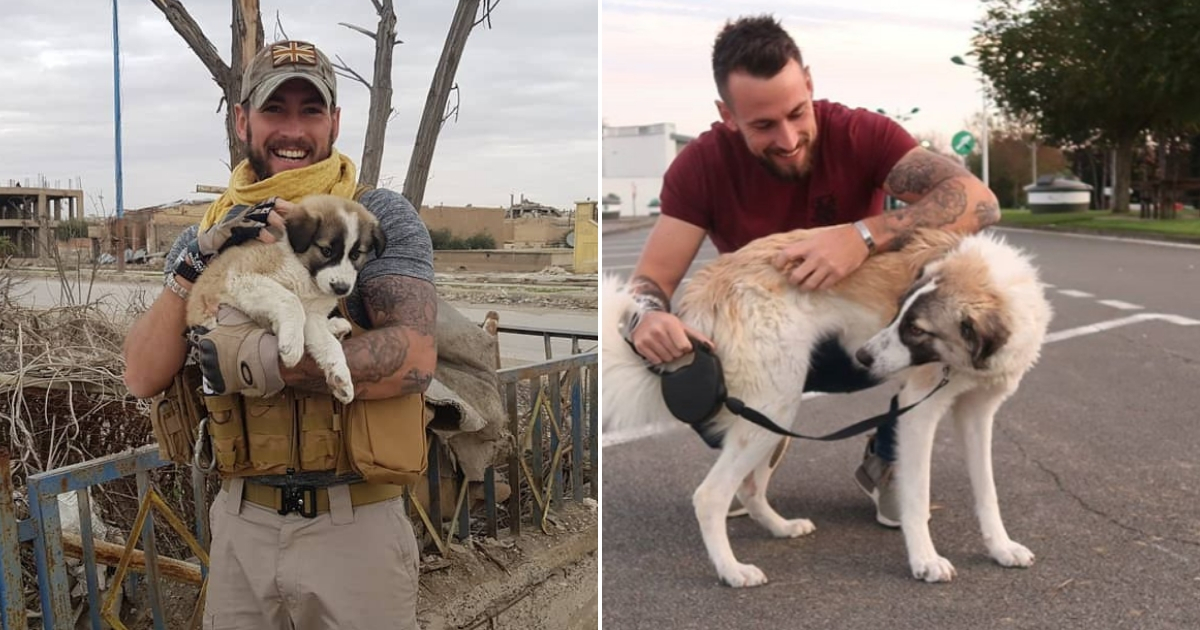 Watch Moment Soldier Comes Face to Face with Dog He Saved Overseas as Tiny Puppy