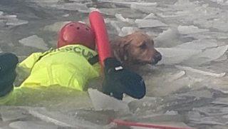 Daring Dog Rescue