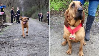 A blood hound runs a half marathon.