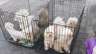Nine dogs squished in cages