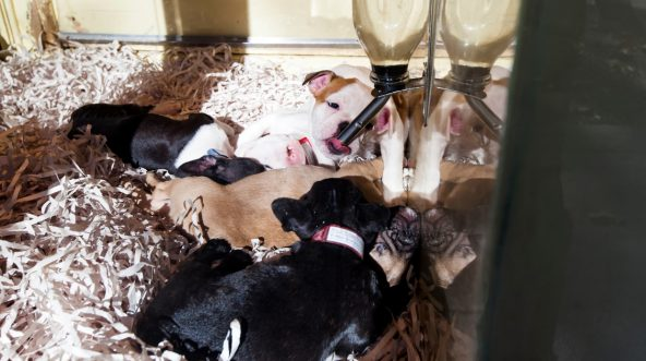 Puppies in pet store window