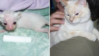Tiny Cat Before and After