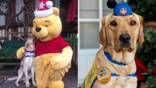 Dog in Disney
