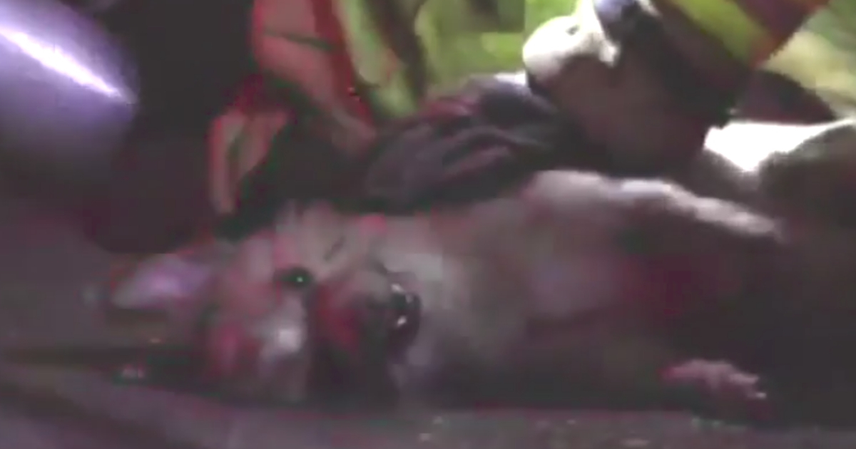 Firefighters Resuscitate Family's Dog After Rescuing Him from House Fire in Dramatic Video
