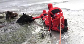 Horse Ice Rescue