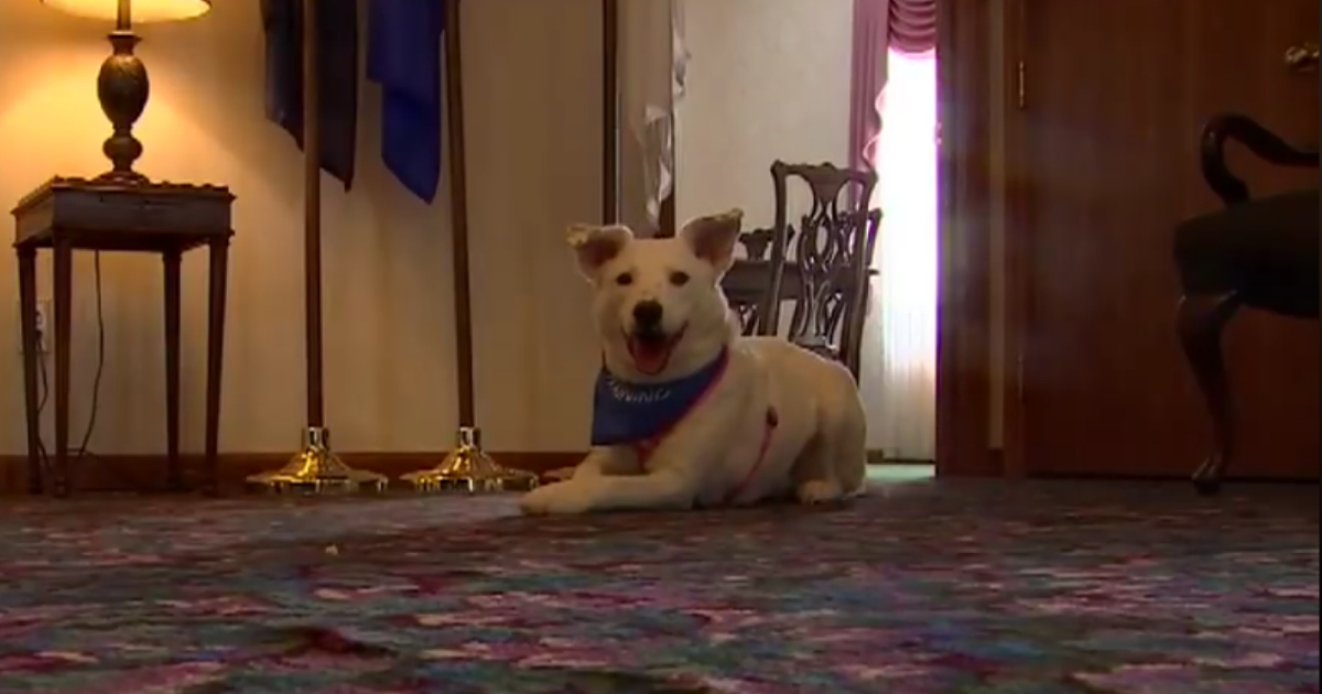 Funeral Home Welcomes New 'Grief Therapy' Dog Who Is Available for Cuddling During Services