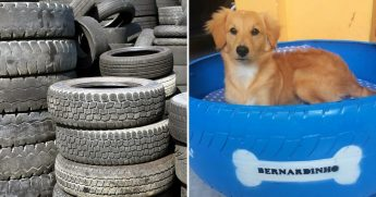 Pile of tires, left, dog in tire bed, right.