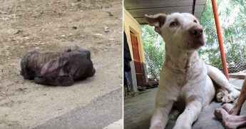 Skinny dog on the side of the road, left, and him healed and furry, right.