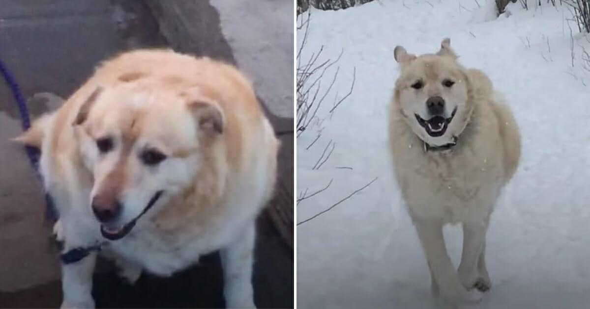 Dog Weight Transformation