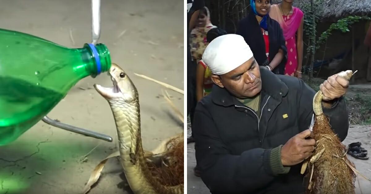 Man helps cobra
