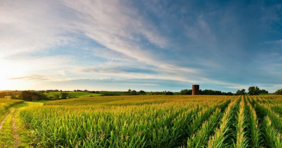 Corn field in Iowa