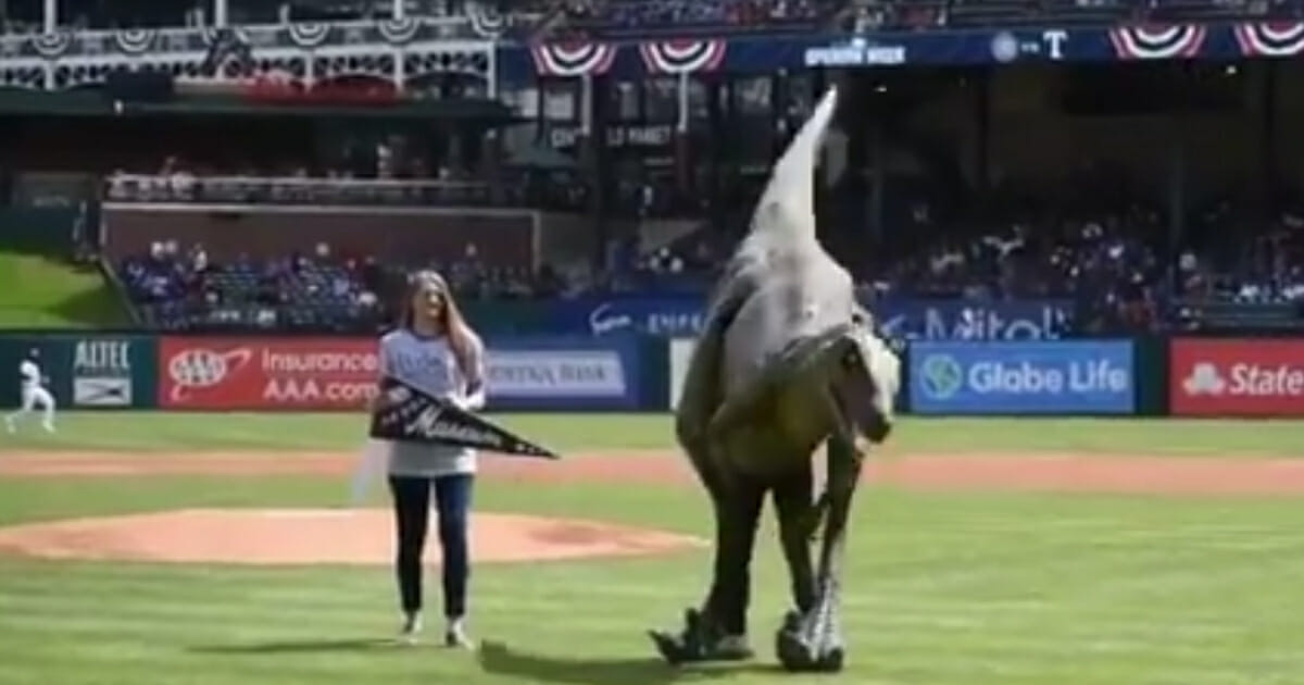 'Roxy' the dinosaur attempts to throw the ceremonial first pitch at Globe Life Park before a game between the Texas Rangers and Chicago Cubs on Sunday, March 31, 2019 in Arlington, Texas.