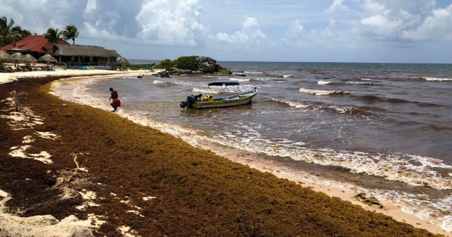 Sargassum, a seaweed-like algae, covers a beach on June 15, 2019 in Tulum, Mexico.