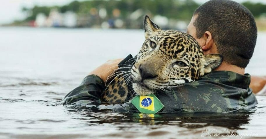 a Brazilian army soldier swims in the Negro River holding Jiquitaia, a 2-year-old jaguar