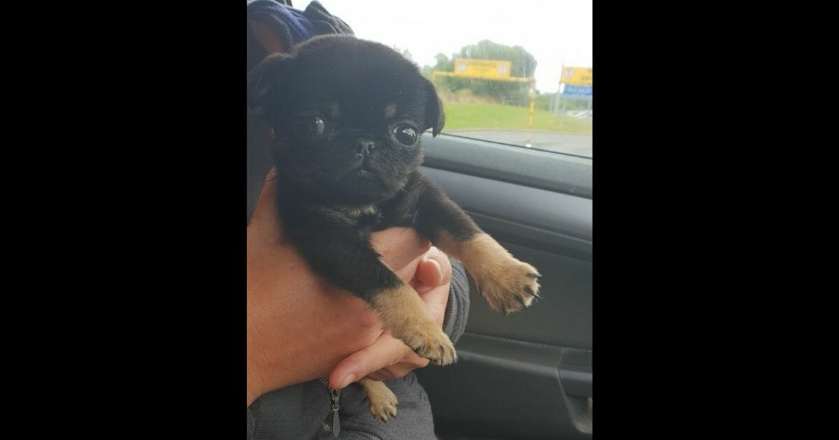 Puppy Found Inside Plastic Bag After Woman Hears Him Whining for Help