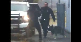 K-9 jumps into action after suspect slugs cop.