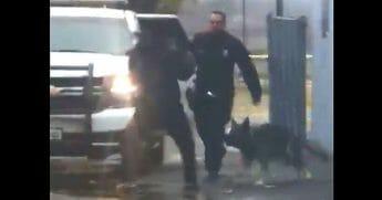 K-9 jumps into action after suspect slugs cop.