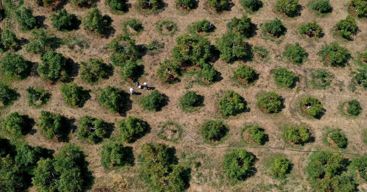 Farmers work at an avocado plantation in the community of Tochimilco in Mexico's Puebla state on April 5, 2019.